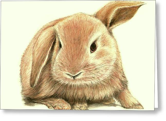 Greeting Card featuring the drawing Sweet Bunny by Heidi Kriel