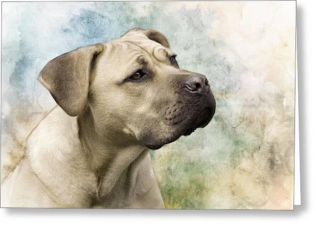 Sweet Cane Corso, Italian Mastiff Dog Portrait Greeting Card