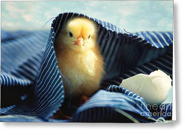 Sweet Chick Greeting Card by Tanja Riedel