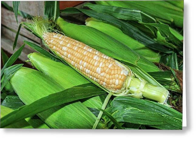 Sweet Corn Greeting Card by Todd Klassy