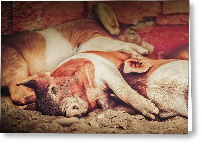 Sweet Dream Piglets Greeting Card