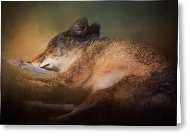 Sweet Dreams - Wildlife Art Greeting Card by Jordan Blackstone