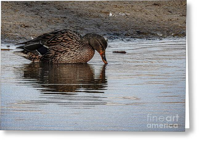 Sweet Duck Kissing Reflection Greeting Card by Brenda Landdeck
