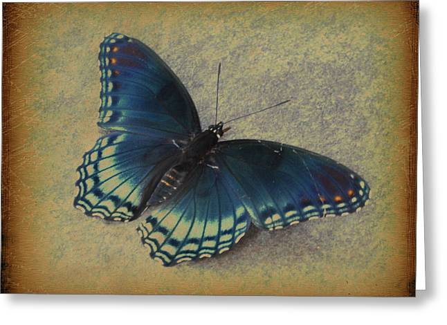 Sweet Flutterby Greeting Card by Jan Amiss Photography