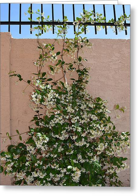 Sweet Jasmine Greeting Card by Aimee L Maher Photography and Art Visit ALMGallerydotcom