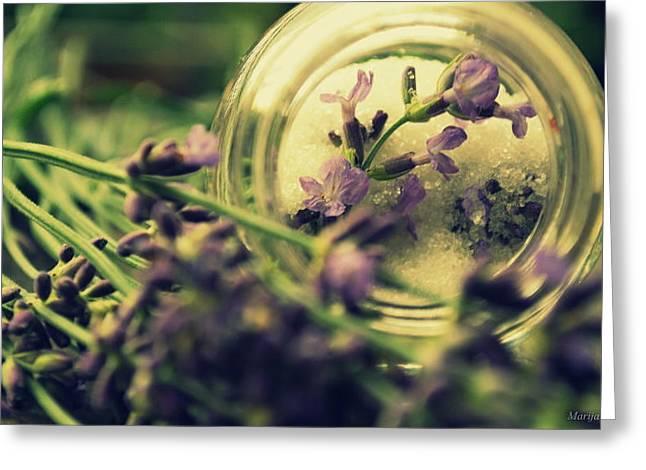 Sweet Lavender Greeting Card by Marija Djedovic