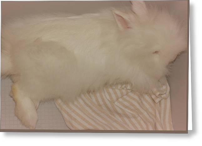 Sweet Lazy Bunny Greeting Card