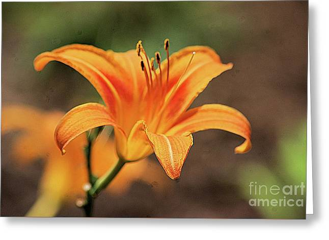 Sweet Lilly In Orange Greeting Card