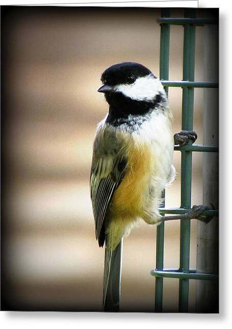 Sweet Little Chickadee Greeting Card by Lisa Jayne Konopka