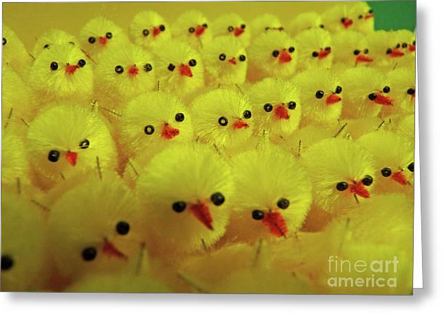 Sweet Little Chicks Waiting For Easter Greeting Card