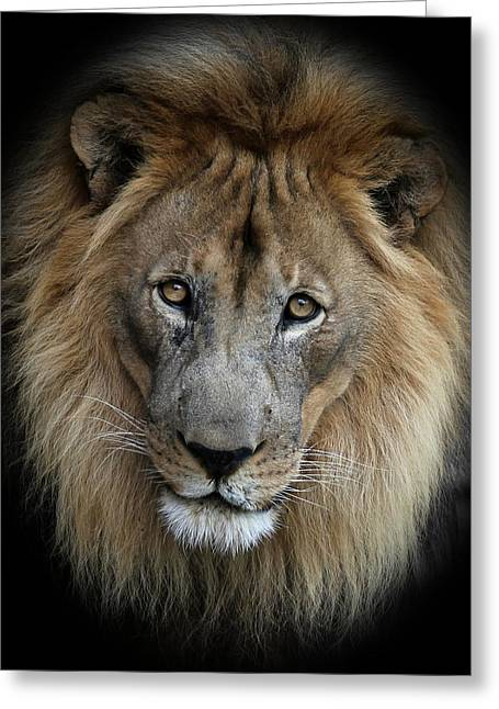 Sweet Male Lion Greeting Card