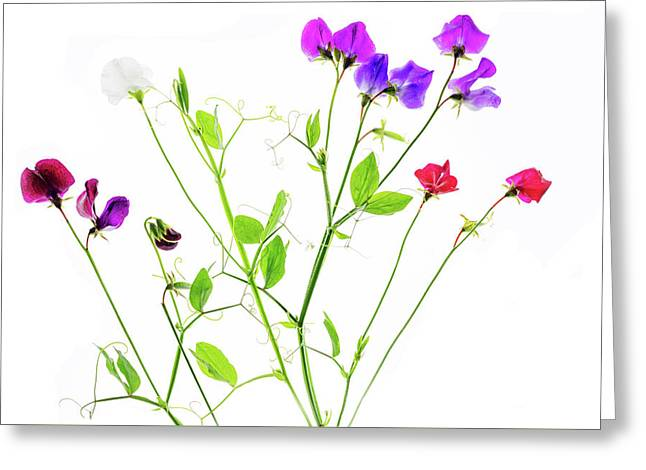 Greeting Card featuring the photograph Sweet Peas by Rebecca Cozart