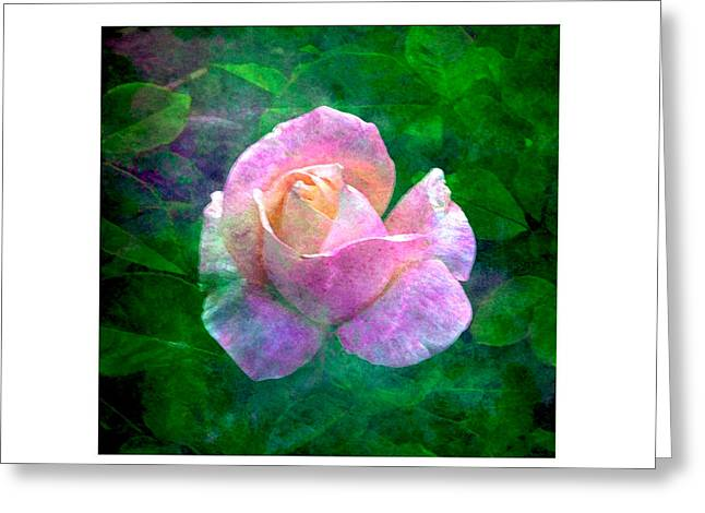 Greeting Card featuring the photograph Sweet Perfume by Karo Evans