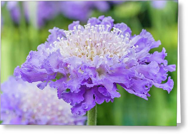 Greeting Card featuring the photograph Sweet Petal by Nick Bywater