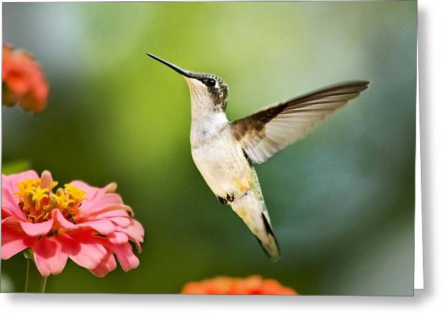 Sweet Promise Hummingbird Square Greeting Card by Christina Rollo
