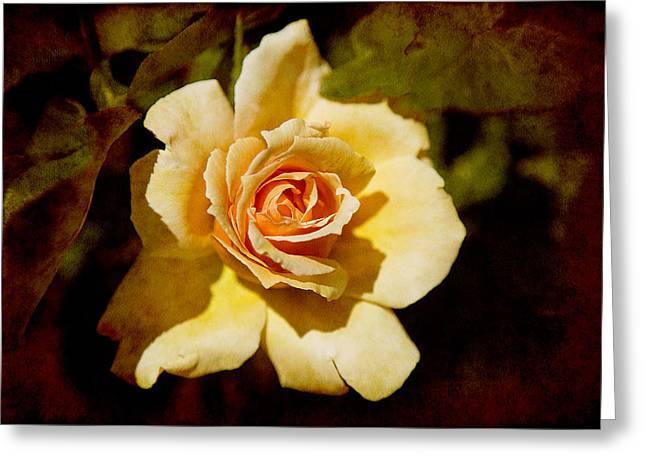 Sweet Rose Greeting Card