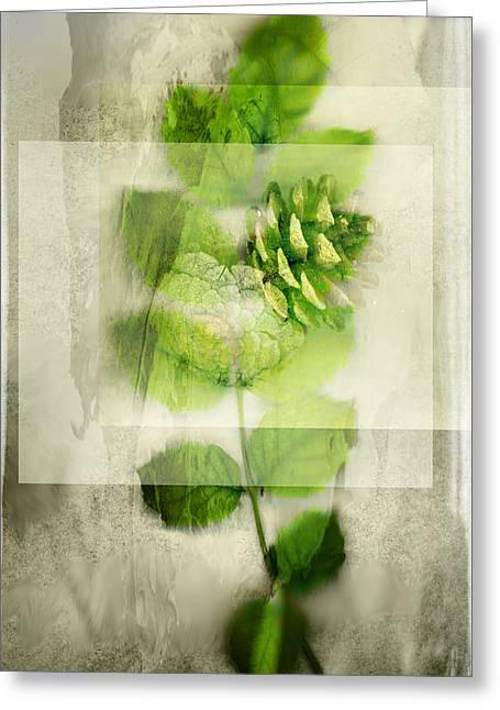 Sweet Rustic Pine Greeting Card by Dan Turner
