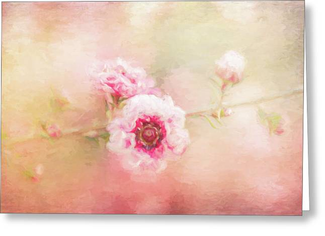 Sweet Spring Blossom Greeting Card