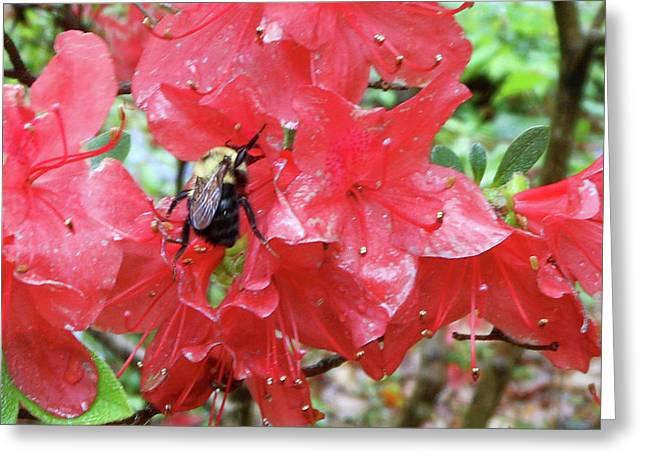 Sweet To Be An Azalea Tree Greeting Card