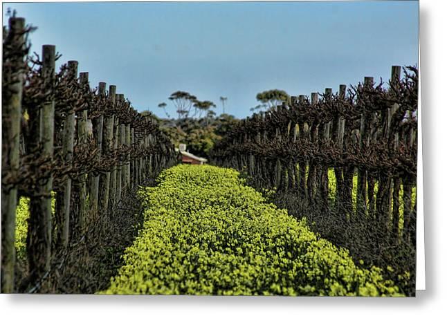 Sweet Vines Greeting Card by Douglas Barnard