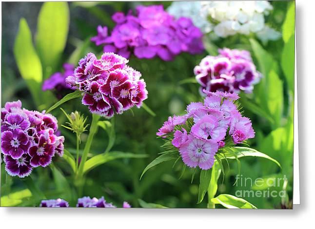 Sweet William Flowers In Garden Greeting Card by Karen Adams