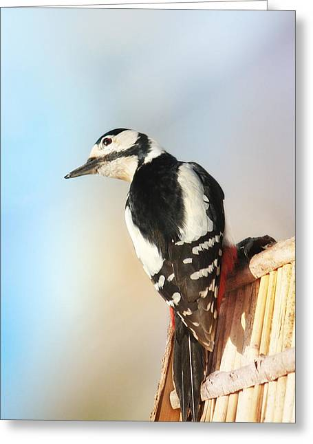Sweet Woodpecker Greeting Card by Heike Hultsch