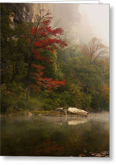 Sweetgum In The Mist At Steel Creek Greeting Card