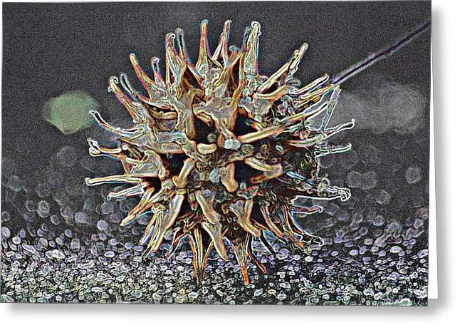 Greeting Card featuring the photograph Sweetgum Ball by Donna G Smith