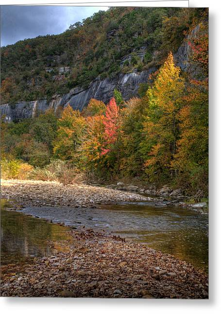 Greeting Card featuring the photograph Sweetgums At Steel Creek  by Michael Dougherty