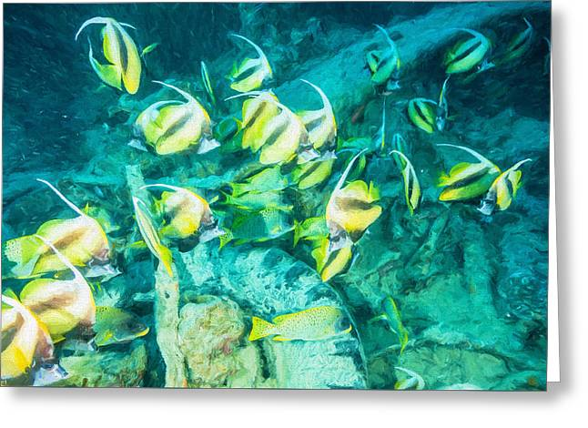 Sweetlips And Bannerfish 2 Greeting Card by Roy Pedersen