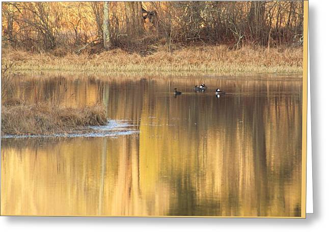 Swift River In Evening Light Greeting Card