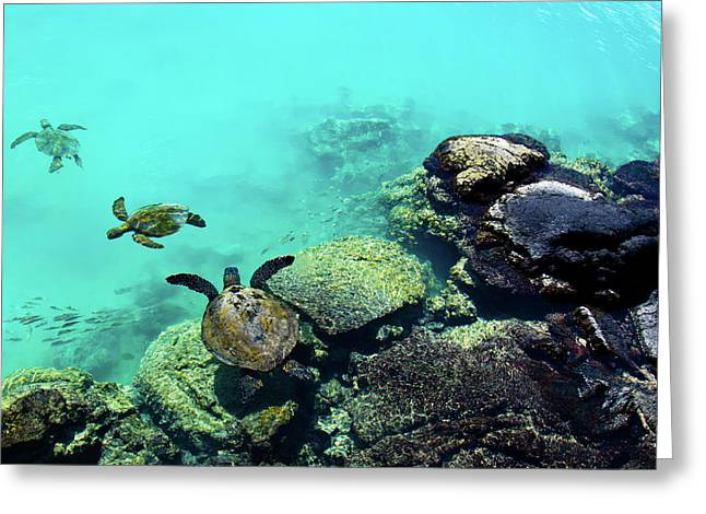 Swimming Honu Greeting Card