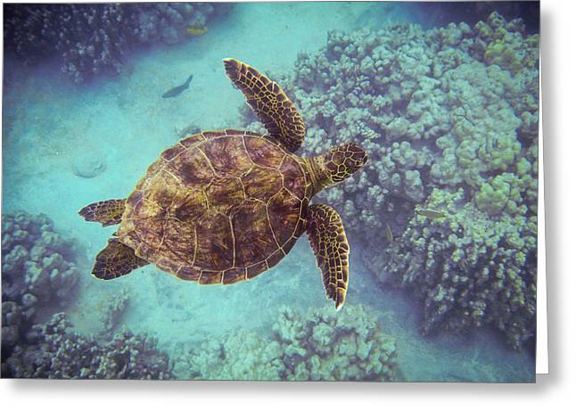 Swimming Honu From Above Greeting Card