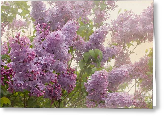 Swimming In A Sea Of Lilacs Greeting Card