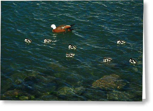 Swimming Lessons 2 Greeting Card by Terry Perham