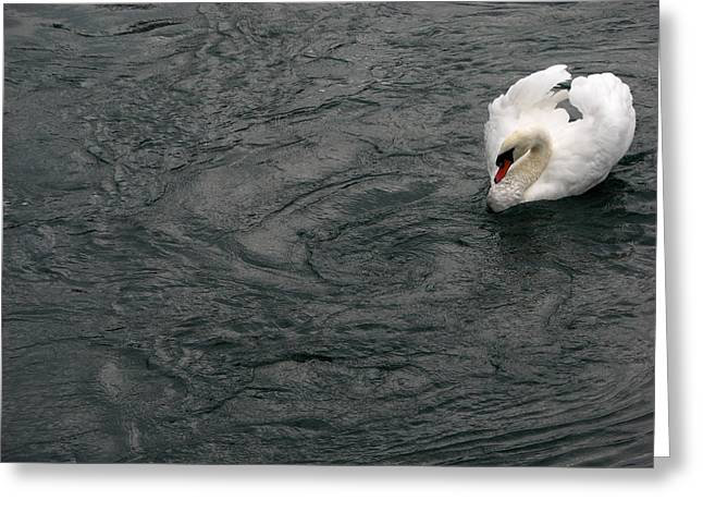 Swans... Greeting Cards - Swimming Swan Greeting Card by Andrea Arnold