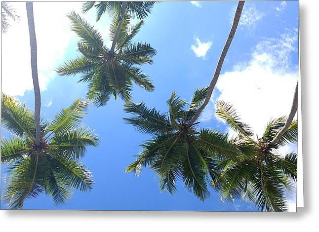 Swinging Coconut Trees Greeting Card by Sheryl Chapman Photography