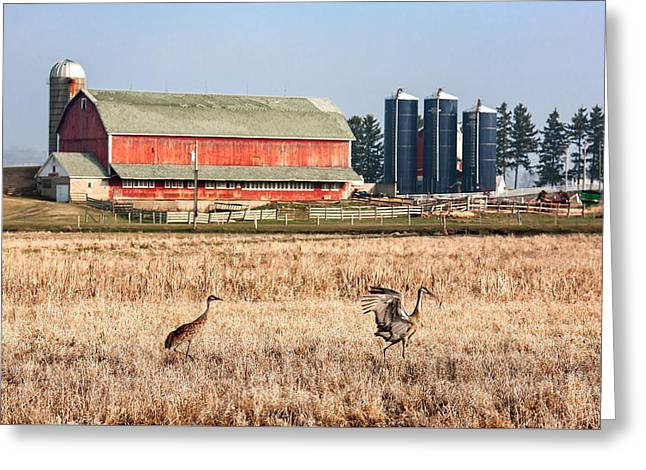 Swiss Cranes Greeting Card by Todd Klassy