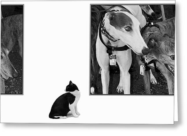 Sworn Enemies - Gently Cross Your Eyes And Focus On The Middle Image Greeting Card by Brian Wallace