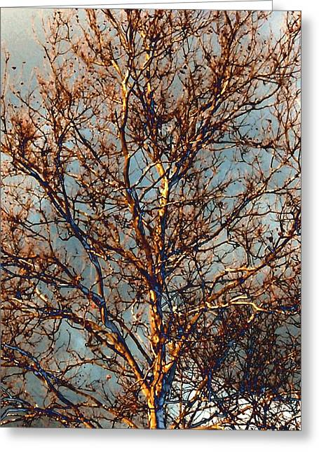 Sycamore Against November Sky Greeting Card by Beth Akerman