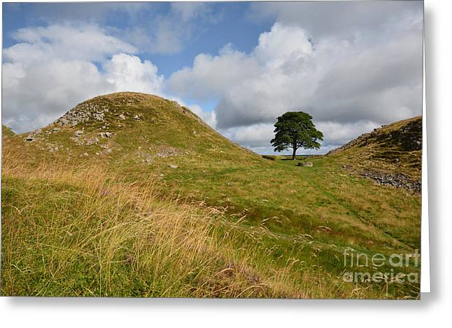 Sycamore Gap Greeting Card by Nichola Denny