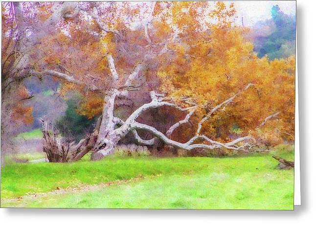 Sycamore Grove 1 Greeting Card