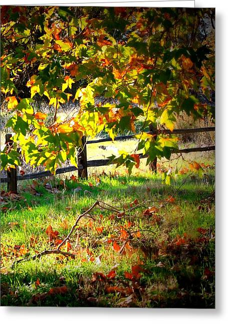 Sycamore Grove Fence 2 Greeting Card by Carol Groenen