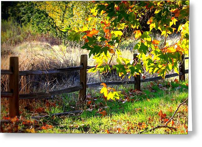 Fall Scene Greeting Cards - Sycamore Grove Series 11 Greeting Card by Carol Groenen