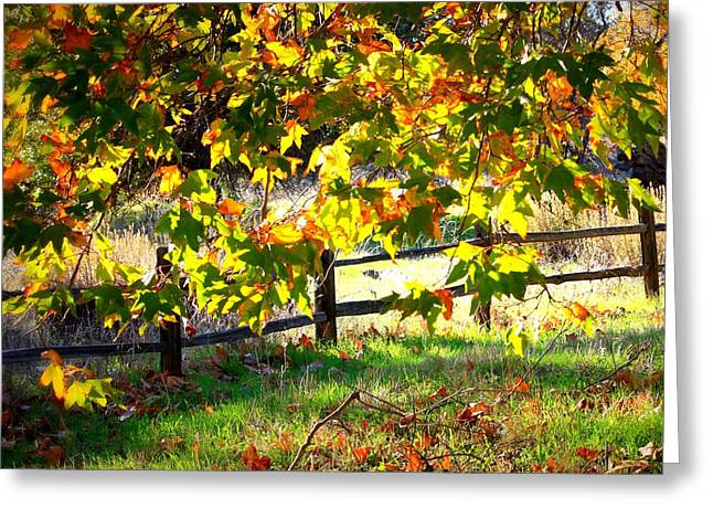 Sycamore Grove Series 5 Greeting Card