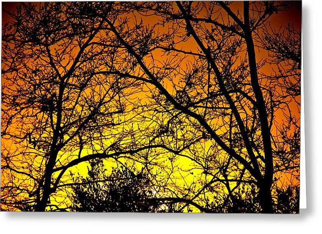 Sycamore Sunset Greeting Card