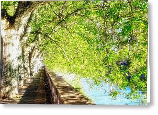 Sycamore Trees Along The Tiber River Greeting Card by George Oze