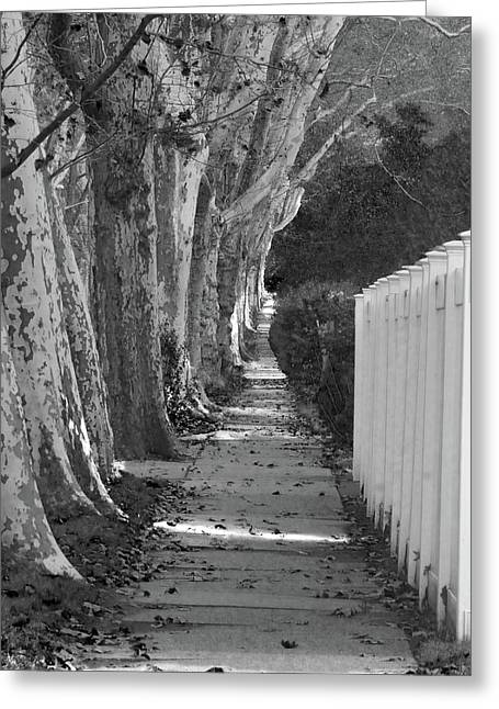 Sycamore Walk-grayscale Version Greeting Card