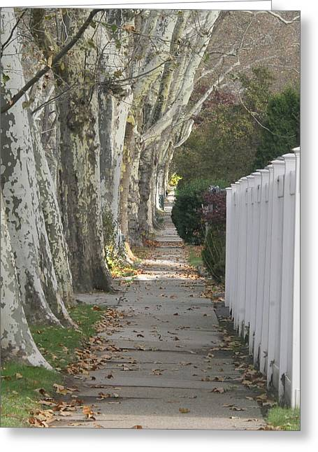 Sycamore Walk Greeting Card