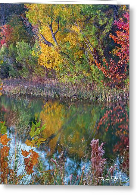 Sycamores And Willows Greeting Card by Tim Fitzharris